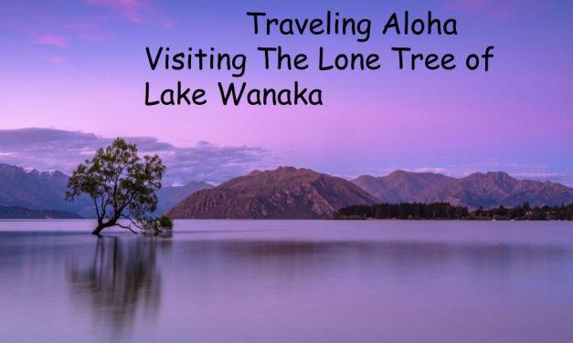 Visiting The Lone Tree of Lake Wanaka